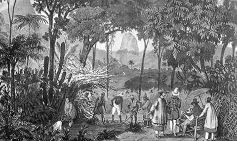 Brasile giardino botanico tè