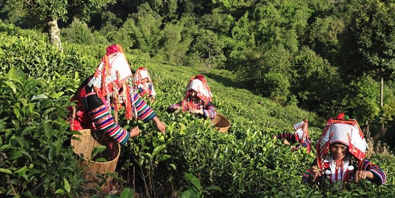 Yunnan- Xiding-Bulang-Ethnic-Township-of-Menghai-County-in-XishuangBanna