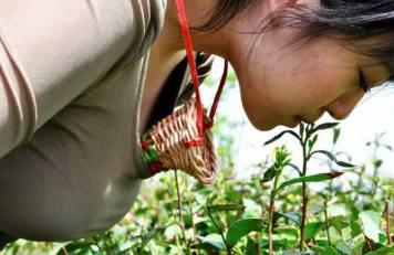 il tè viene raccolto con le labbra