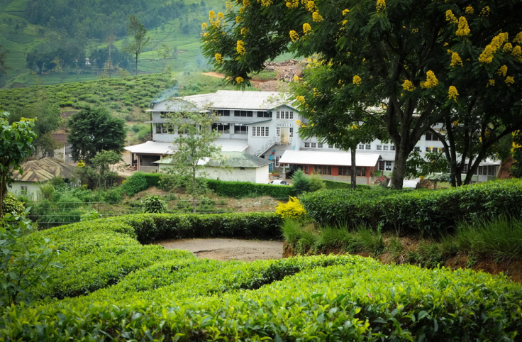 Radella Tea Estate