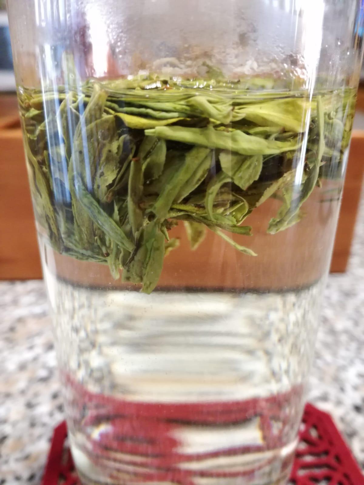 foglie di Long Jing in infusione